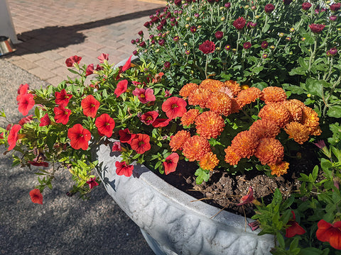 planter of fall flowers