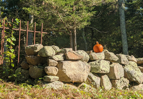 stonewall with pumpkin mystic ct
