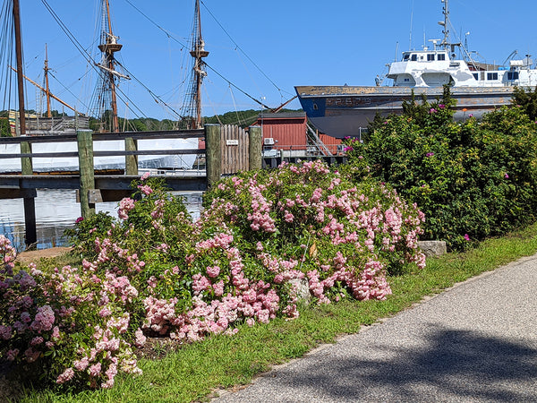 roses and mystic seaport