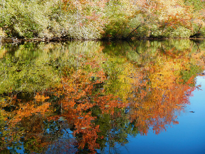 fall reflections new england