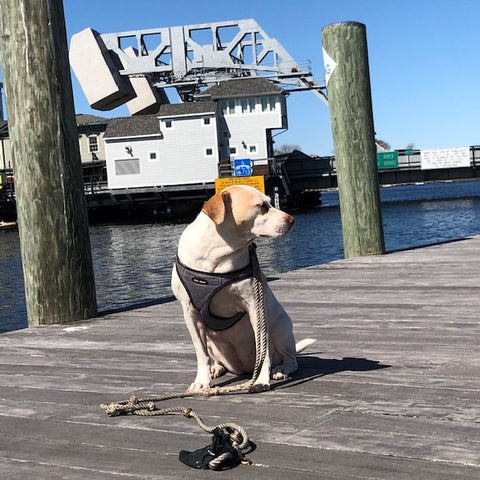 sad Betsy Mongrel by the drawbridge in Mystic
