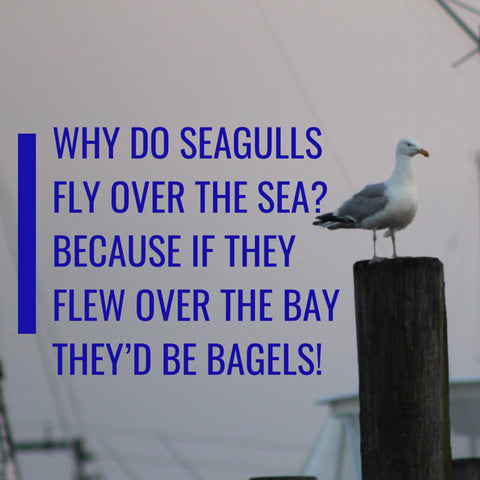 why do seagulls fly over the sea? because if they flew over the bay they would be bagels