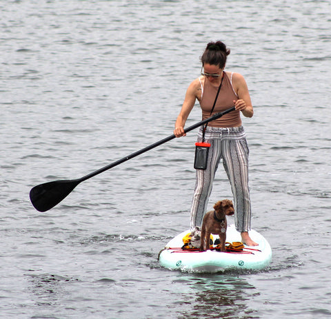 pup catching a ride on a paddle board
