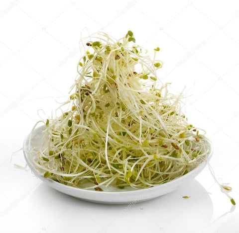 Alfalfa-sprouts-for-increasing-milk-production