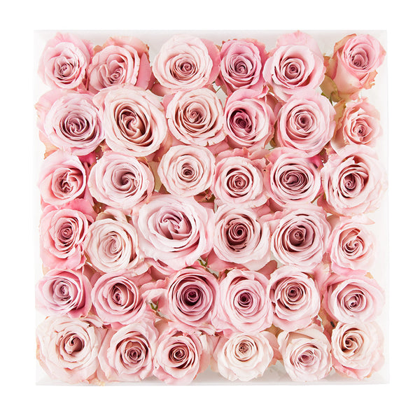 3 dozen pink faith roses in square white acrylic box