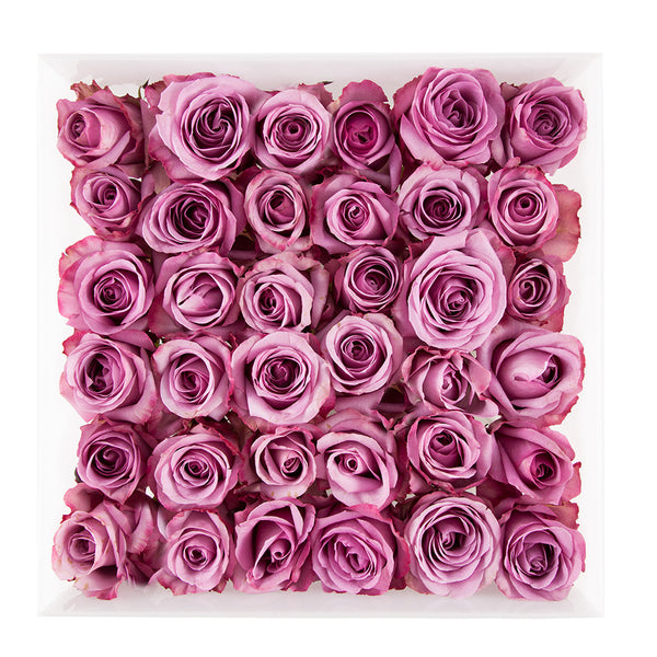three dozen lavender roses arranged in square