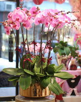 Queen of Orchids (10 Stems)