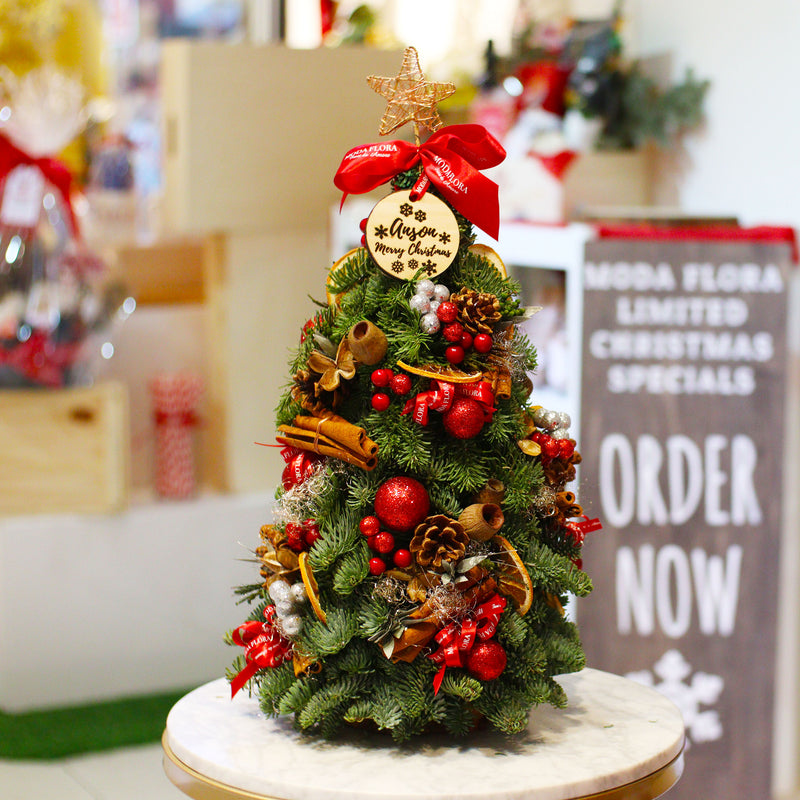 Mini Fresh Christmas Tree (30/40/50cm)
