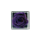MODA CUBE - Premium Rose - Purple