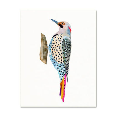 Northern Flicker Woodpecker 8x10