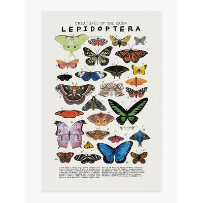 Wall Art Print - Creatures of the Order Lepidoptera Art Print 12 x 18 inches