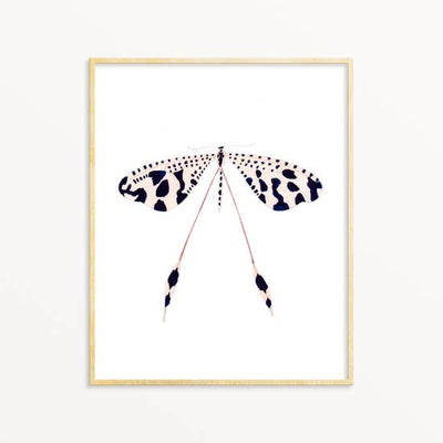 Spoon Wing ~ Art Print 8x10