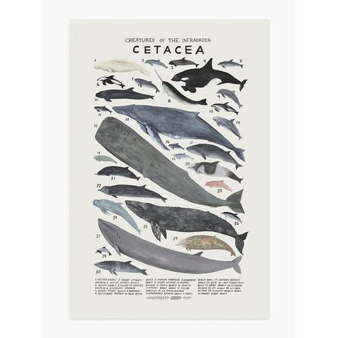 Wall Art Print - Creatures of the Infraorder Cetacea Art Print 12 x 18 inches