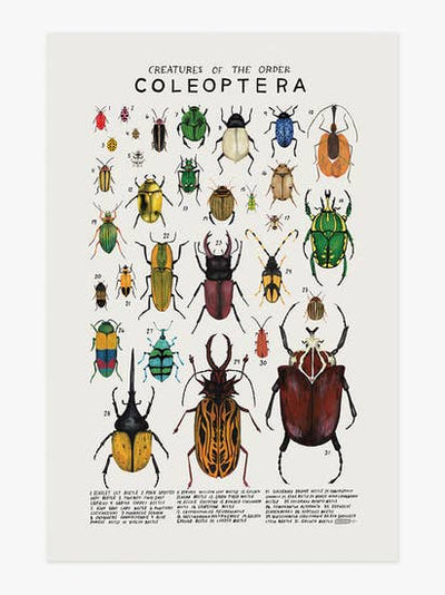 Wall Art Print - Creatures of the Order Coleoptera Art Print 12 x 18 inches