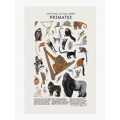 Wall Art Print - Creatures of the Order Primates Art Print 12 x 18 inches