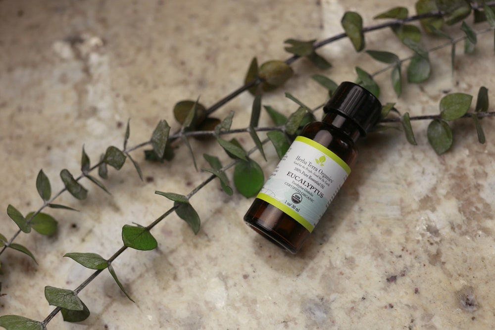 Eucalyptus Essential Oil for Your Immunity and 7 other Reasons Why You Need It