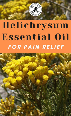 usda certified  organic helichrysum oil for pain relief