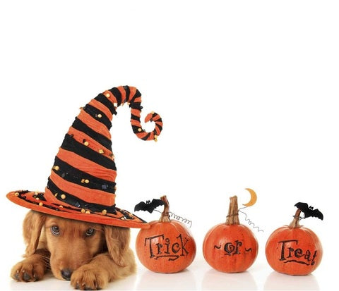 TRICK & NO TREATS - 5 DOG HALLOWEEN SAFETY TIPS