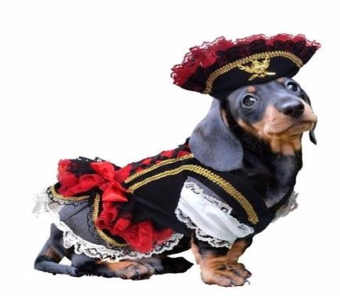 BONES BIZZNESS TOP 5 DOG HALLOWEEN COSTUME PICKS