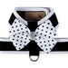 POLKA DOT NOUVEAU BOW + BLACK TINKIE HARNESS W/WHITE TRIM