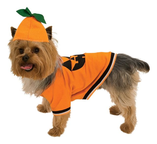 PUMPKIN PET DOG COSTUME, Costume - Bones Bizzness