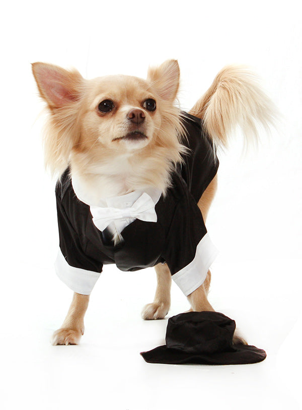 BIG DAY DOG TUXEDO W/ BOW TIE COLLAR, Costume - Bones Bizzness