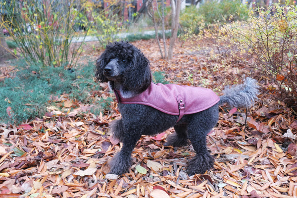 BORDEAUX LEATHER DOG JACKET, Coats - Bones Bizzness