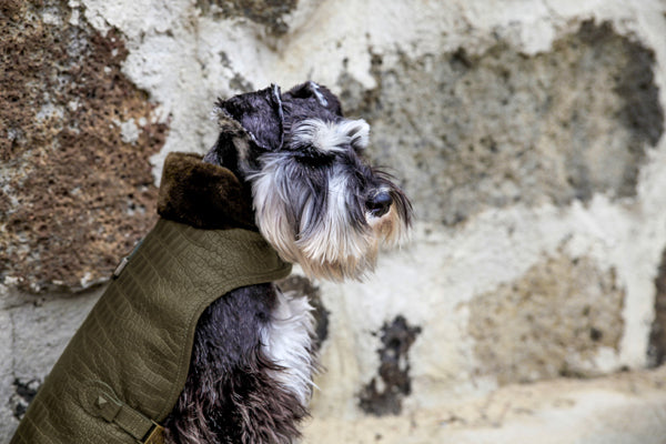 OLIVE LEATHER DOG JACKET, Coats - Bones Bizzness