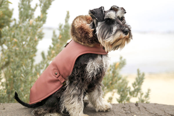ROSE LEATHER DOG JACKET