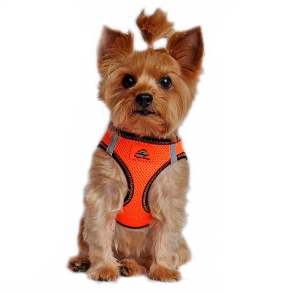 AMERICAN RIVER CHOKE FREE DOG HARNESS TOP STITCH COLLECTION - IRIDESCENT ORANGE, Harness - Bones Bizzness