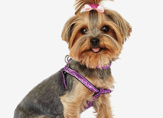 GLAM GEAR COLLARS & HARNESSES (13 COLORS), Collars - Bones Bizzness