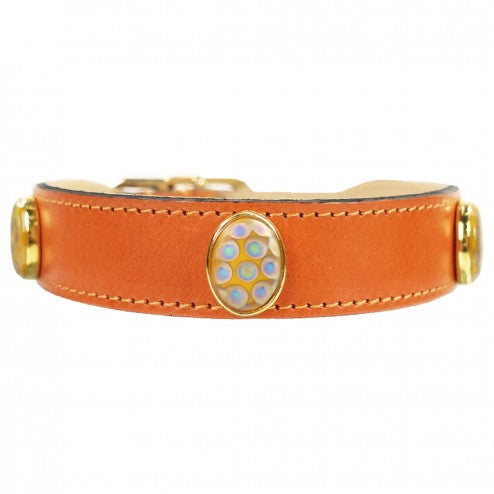 PEACOCK IN TANGERINE DOG COLLAR