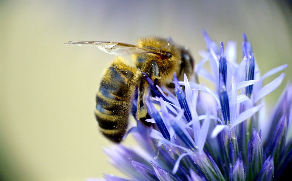 Save the bees with Raw Artisan Honey