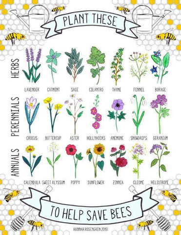 Bee friendly flowers to plant in your garden