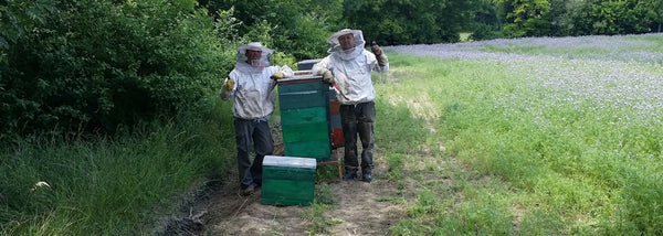 Rural bee keeping, raw honey making