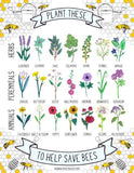Bee-Friendly British Wildflower Seeds