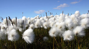 5 REASONS TO CARE ABOUT ORGANIC COTTON