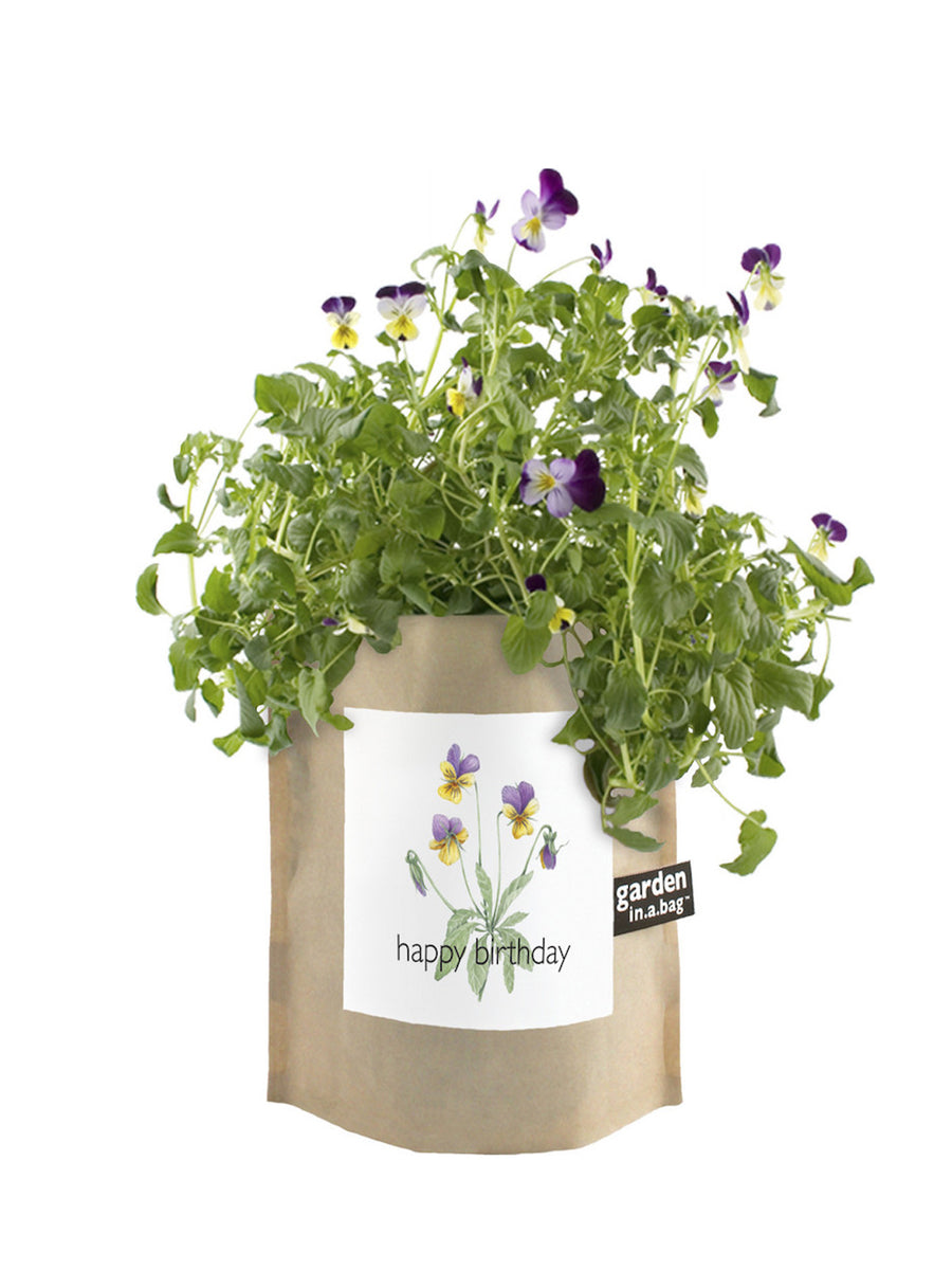 Garden In a Bag - Happy Birthday Pansy