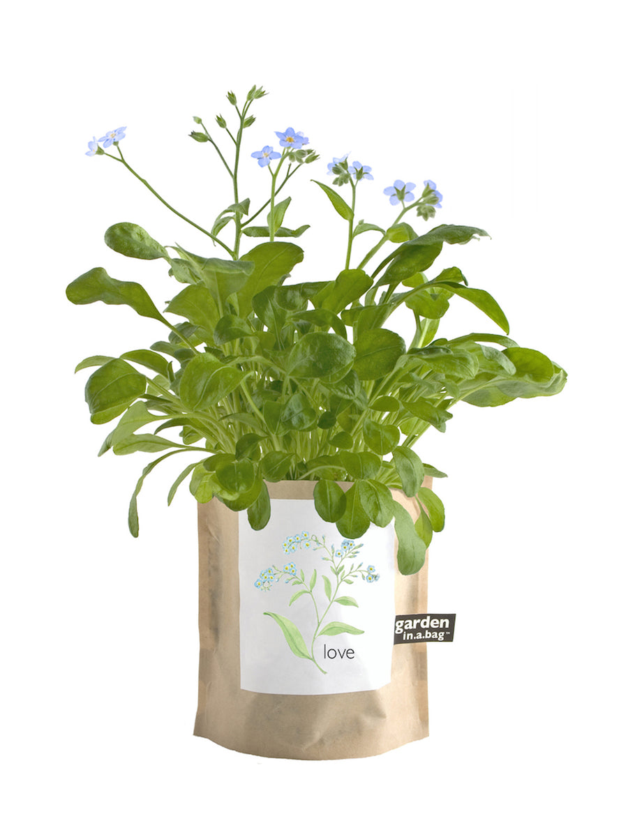 Garden In a Bag - Love (Forget-Me-Not)
