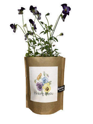 Garden In a Bag - Thinking of You Pansy