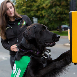 Give the gift of a uniform for a dog in training