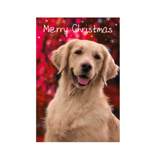 C - 'Golden Retriever Smile' Christmas cards pack of 10