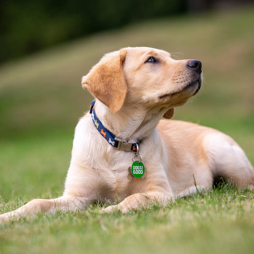 Collar for a puppy - Virtual Gift