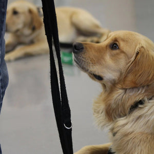 Give the gift of a puppy class