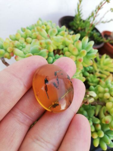 Mexican Amber 4.2g fully polished cabochon pendant