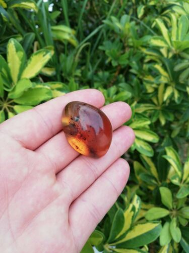 Red green Mexican Amber 10g Good round shape and flat base