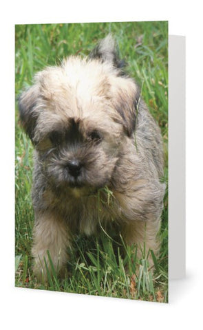Blank Card - Puppy - INPCreative - 1