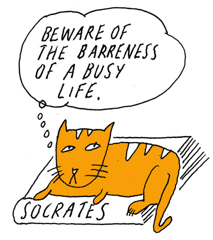 Philosopher Cat: Socrates