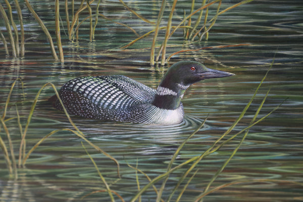 Family of Loons Painting by Stephen Hewer