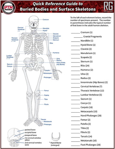 Buried Bodies and Surface Skeletons Quick Reference Guide